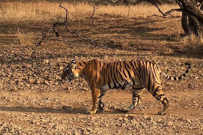Sariska Wildlife Sanctuary, Alwar