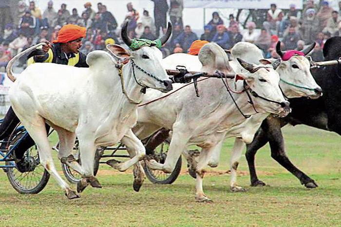 Kila Raipur Festival